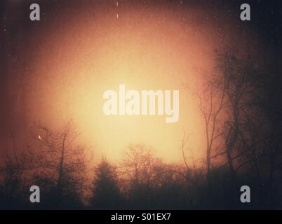 Tree silhouette with grunge effect - Stock Photo