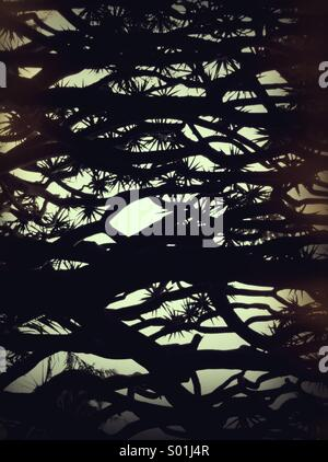 Tree abstract - Stock Photo