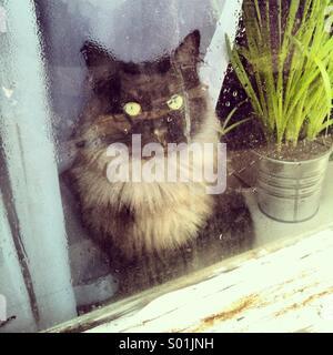 Cat at Wet Window - Stock Photo