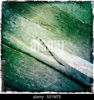 Eucalypt bark - Stock Photo