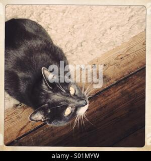 Cat ready to pounce - Stock Photo
