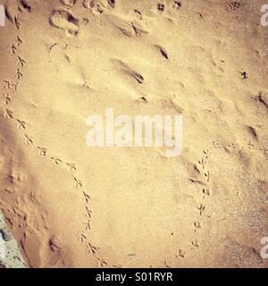 Bird footprints in the sand - Stock Photo