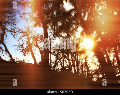Natural forest scene - Stock Photo