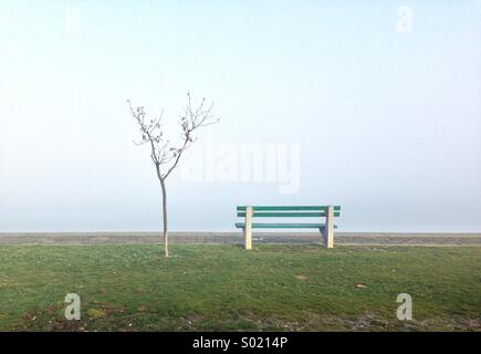 Lonely bench and young tree in fog - Stock Photo