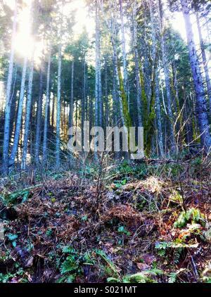 Backlit forest scene - Stock Photo