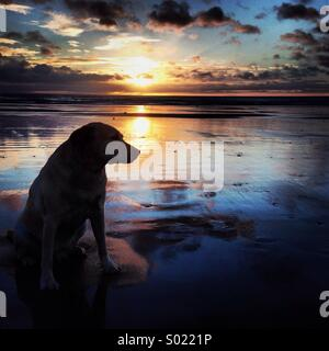 Dog at sunrise - Stock Photo