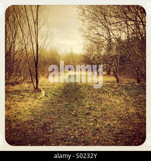 Woodland walk near redrow Morpeth, Northumberland - Stock Photo