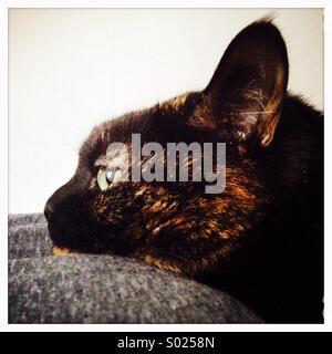 Cat resting Head - Stock Photo