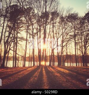 The setting sun shining through trees at a small park - Stock Photo