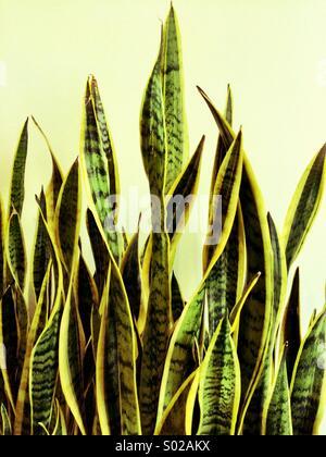 Indoor plant - Stock Photo