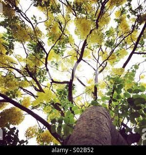 Yellow leaf tree - Stock Photo