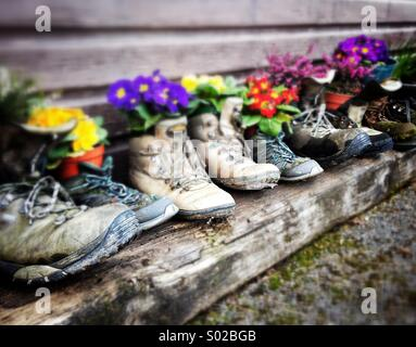 Flowers in old walking boots - Stock Photo