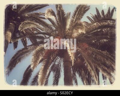 Palm tree in Nerja on the Costa Del Sol - Stock Photo