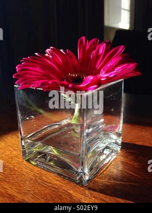 Pink flower in a glass vase sitting on a table. - Stock Photo