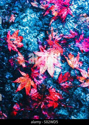 Red leaves on blue abstract background - Stock Photo