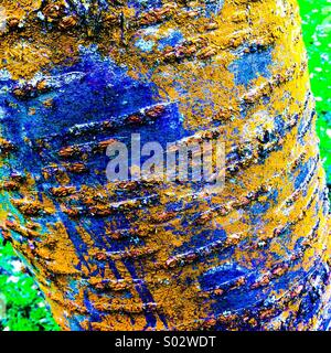 Strongly coloured bark on tree trunk - Stock Photo