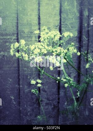Wild flowers against fence - Stock Photo