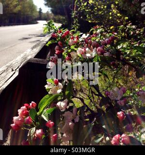 Flowers on the side of a road. - Stock Photo