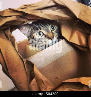 Tabby cat kitten plaing with paper in cardboard box. - Stock Photo