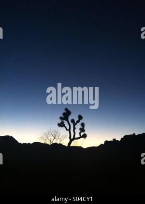 The silhouette of a joshua tree and rocks against a blue evening sky. - Stock Photo