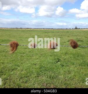 Balls of wool caught on a fence - Stock Photo