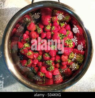 Strawberries in a colander - Stock Photo