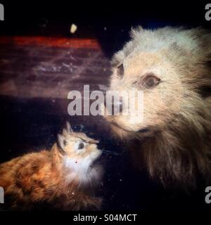 Two stuffed animals are displayed in a window in Zona Rosa neighborhood, Mexico City, Mexico - Stock Photo