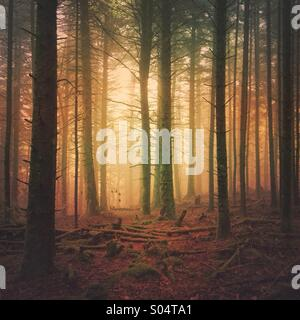 Dark foggy forest with sunlight through trees - Stock Photo