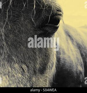 Horse face and eye close up - Stock Photo