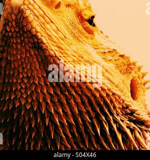 bearded dragon lizard with mohawk stock photo 275454850