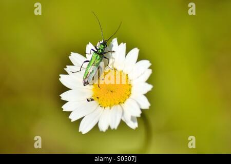 Green Beatle - Stock Photo