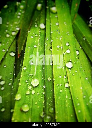 Water droplets on leaves - Stock Photo