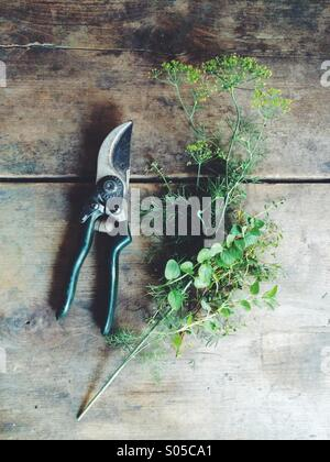 Freshly cut herbs. - Stock Photo
