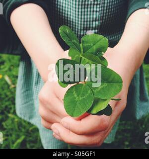 Close up of child holding green clover in hands. - Stock Photo