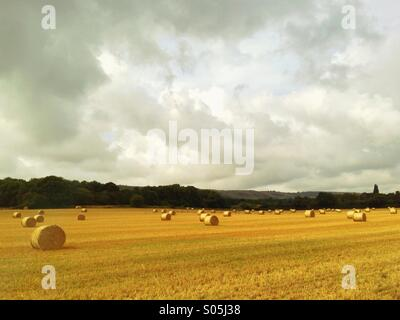 Make hay while the sun shines - a field full of bales of hay ready for collection. - Stock Photo