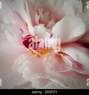 Blüte ganz zart Stock Photo