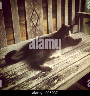 Cat reclining on a wooden bench - Stock Photo