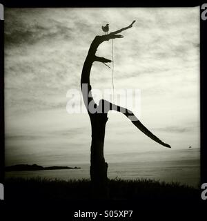 Seagull Perching on Dead Tree 2 - Stock Photo