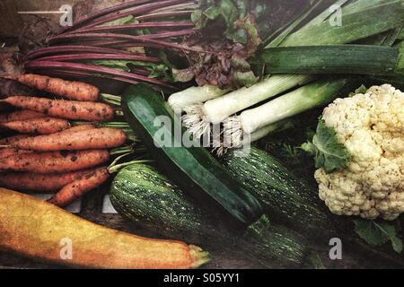 Fresh picked organic vegetables from a home garden - Stock Photo