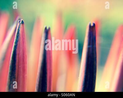 Close up view of gazania petals - Stock Photo
