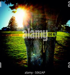 A police tape wrapped around a tree in a park. - Stock Photo