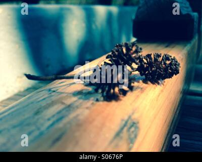 Erlenfrüchte im Ruderboot - Stock Photo