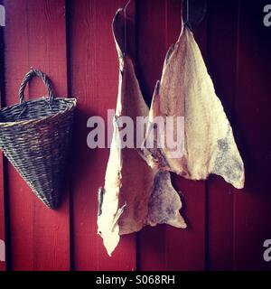 Salted cod drying outside - Stock Photo