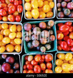 Assortment of colourful farm fresh tomatoes