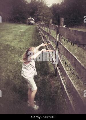 Here horsey! - Stock Photo