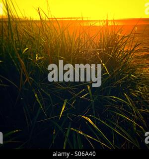 Sea grass by sand dunes on Wirral beach - Stock Photo