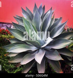 Nice plant - Stock Photo