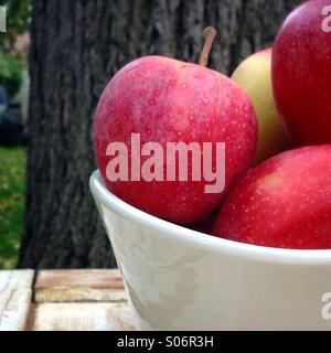 Freshly picked bowl of gala apples - Stock Photo