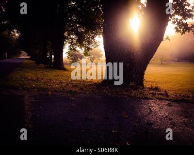 Fall mornings - Stock Photo