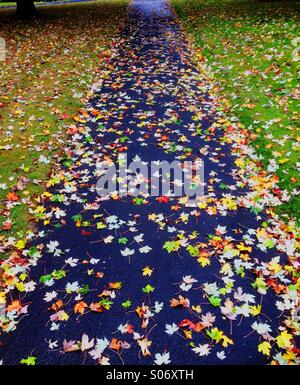 Fallen leaves cover a footpath after a shower of rain in Autumn - Stock Photo